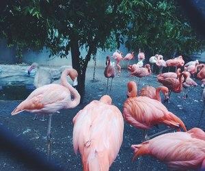 flamingo, pink, and bird image