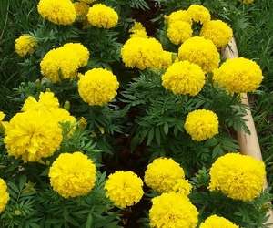 flowers and yellow flower image