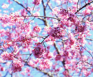 flower, tree, and pink image