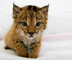 lince and awnt image