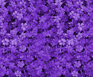 flowers, purple, and 💜 image