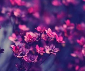 flowers, purple, and 🌸 image