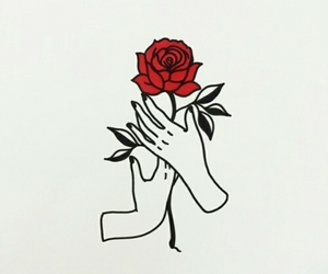 flower, rose, and red image