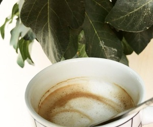 coffee, green, and pictures image
