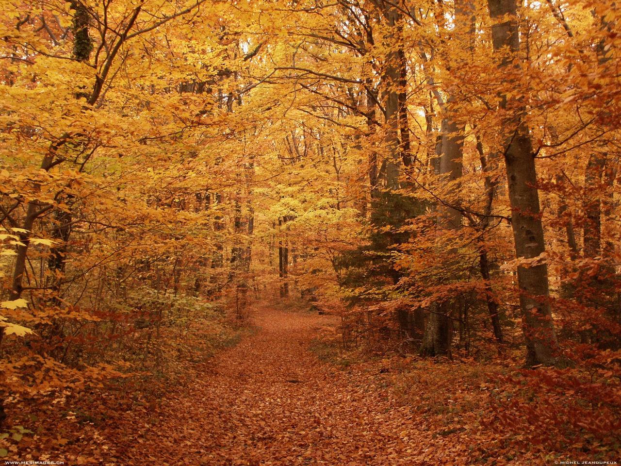 article, autumn, and haiku image
