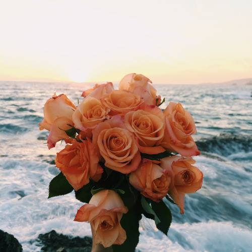 flowers, rose, and ocean image