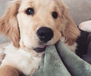 animal, dog, and doglover image