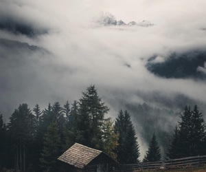 fog, nature, and travel image