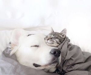 cats, dogs, and pets image