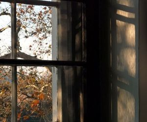 autumn, window, and aesthetic image