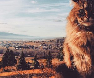cat, autumn, and nature image
