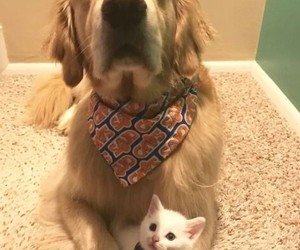 animal, bandana, and dog image