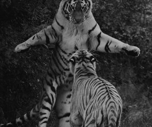 animal, black and white, and dick image