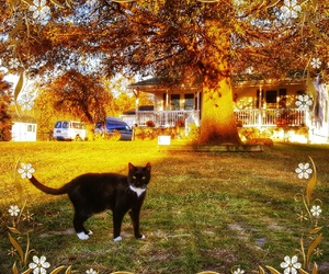 autumn, black&white, and cats image