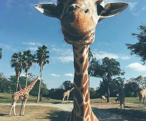 animal, selfie, and giraffe image
