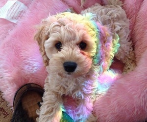 dog, puppy, and rainbow image