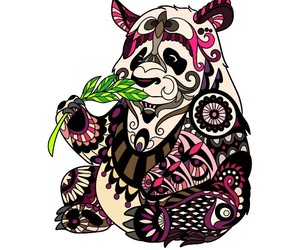 Animales, colores, and pandas image