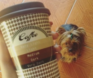 cafe, coffee, and cute image