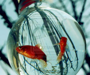 water, cute, and fish image