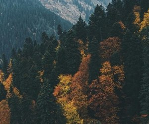 autumn, free, and nature image