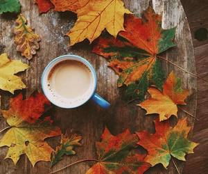 autumn, orange, and tumblr image