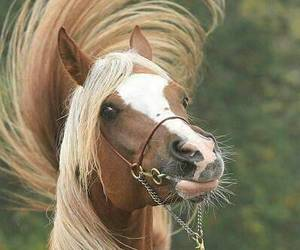 animals, beautiful, and horse image