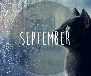 cat, September, and love image