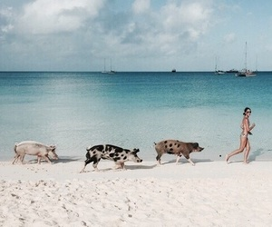 pig, beach, and girl image