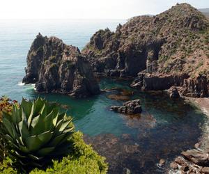 flora, fotografia, and panorama image