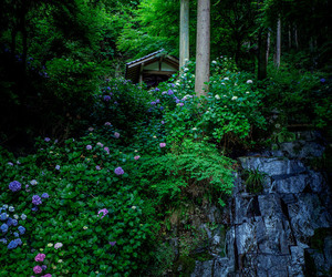 forest, hydrangea, and nature image