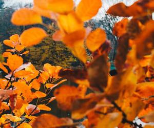 autumn, orange, and fall foliage image