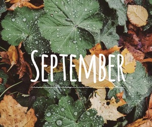 autumn, September, and cool image