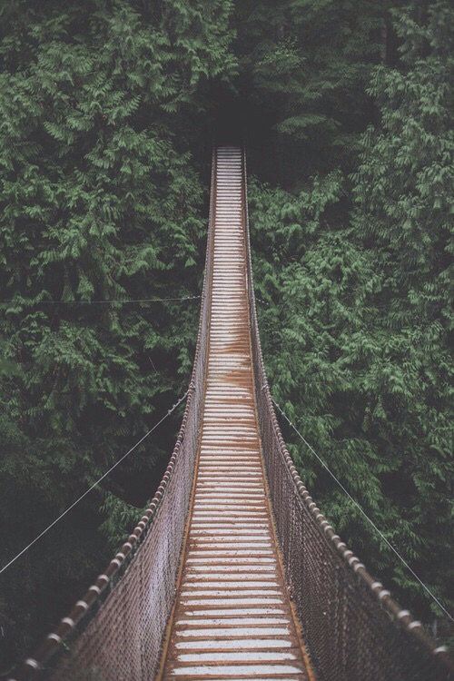 bridge, nature, and green image