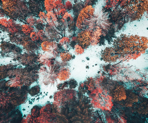 nature, snow, and autumn image