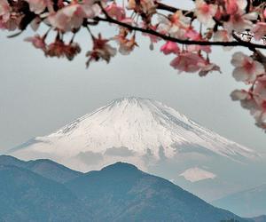 japan, fuji, and cherry blossom image