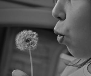 black and white, dandelion, and photography image