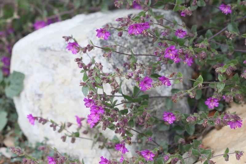 conservation, flowers, and nature image