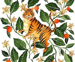 animals, jungle, and tigers image