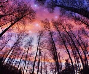 sky, tree, and light image