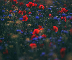 blue, flowers, and red image