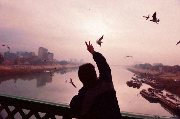 bird, photography, and sky image