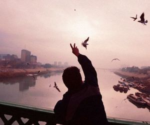 bird, sky, and tumblr image