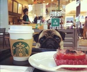 dog, starbucks, and pug image