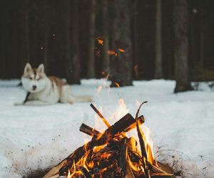 dog, snow, and fire image