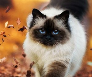 cat, pet, and kitty image