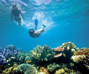 great, reef, and australien image