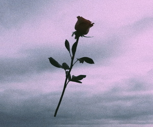 rose and sky image