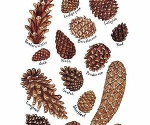 pinecones image