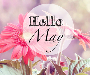 flowers, spring, and may image
