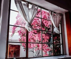 pink, flowers, and home image